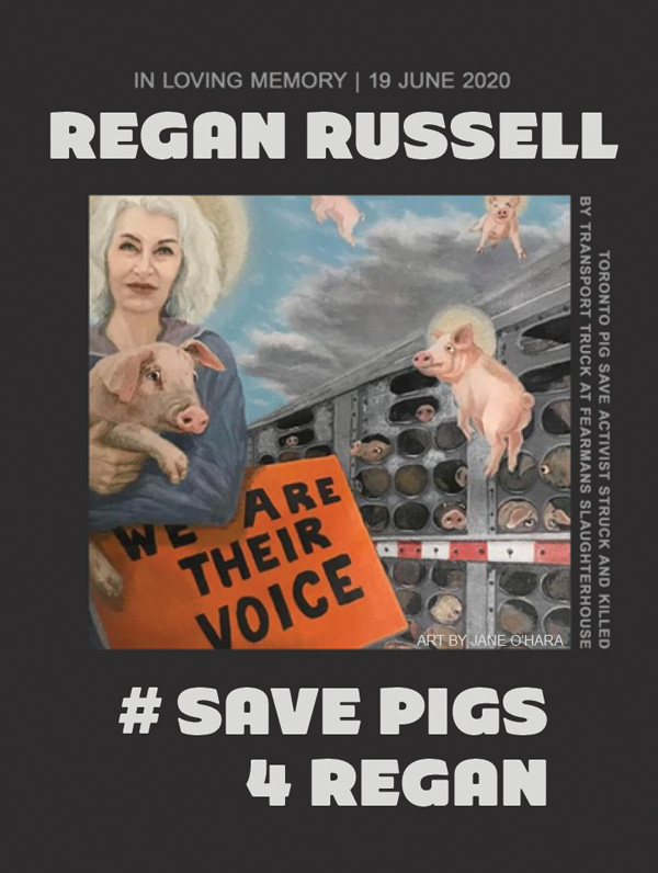 Save Pigs 4 Regan sticker
