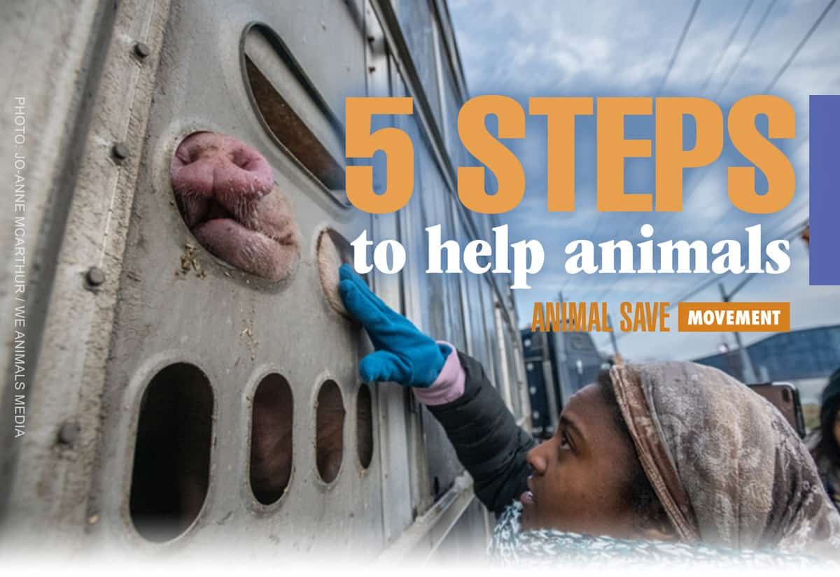 5 steps to help animals