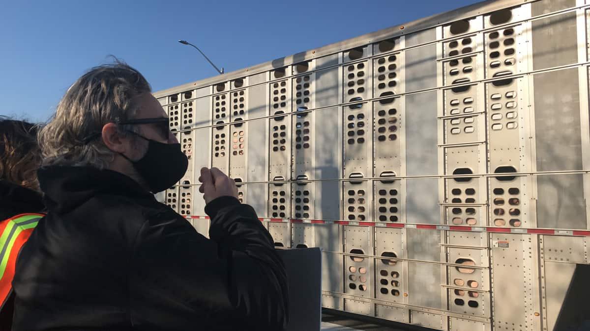 Joaquin Phoenix Toronto Pig Save vigil