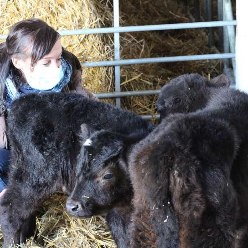 2 rescue calves Germany